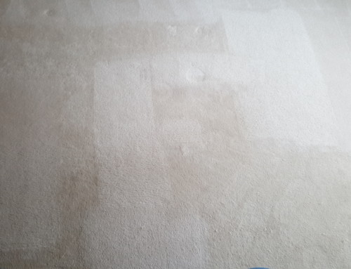 Carpet Cleaning Pictures